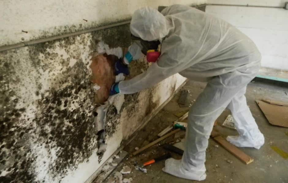 Phoenix Natural Mold Removal Services
