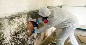 mold-removal-content
